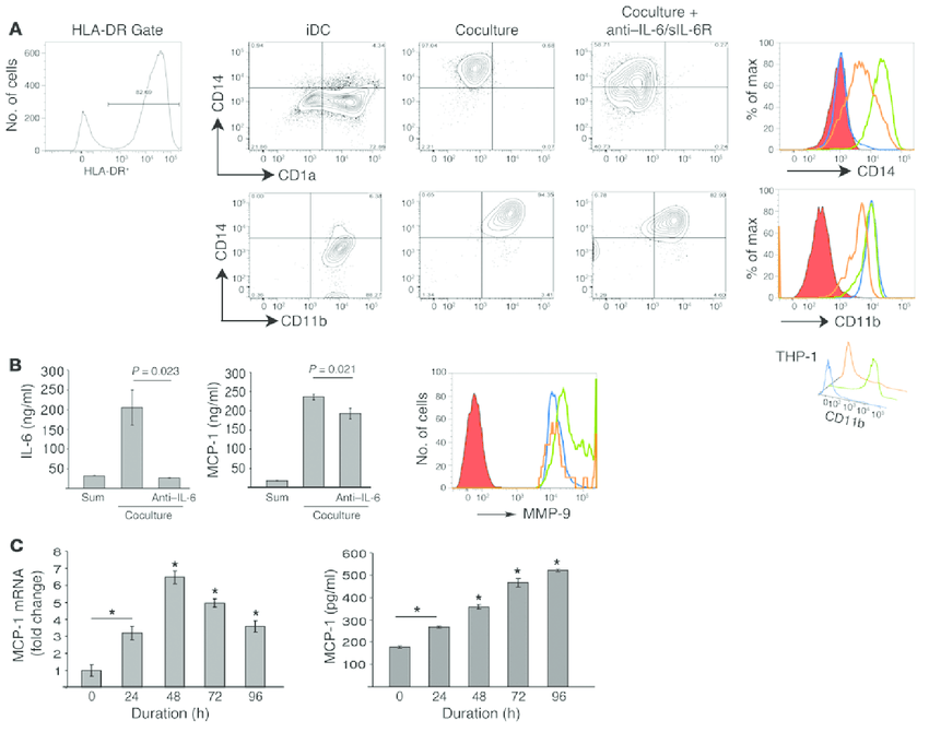 Monocyte-to-macrophage differentiation in coculture is IL