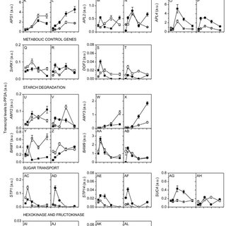 (PDF) Metabolic analysis of kiwifruit (Actinidia deliciosa