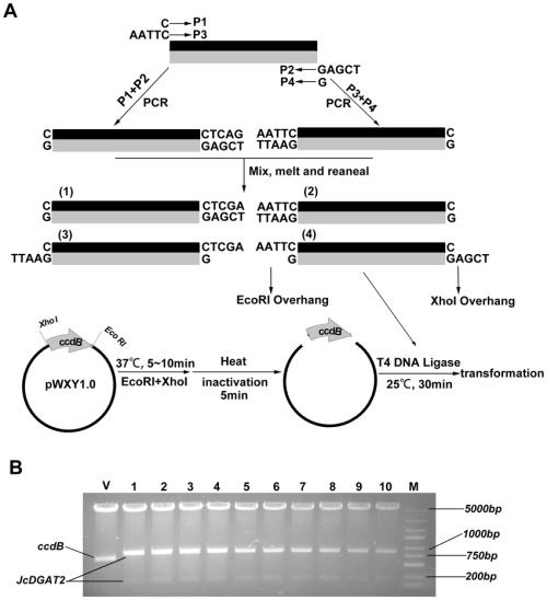 small resolution of schematic diagram of cloning the gene of interest containing internal download scientific diagram