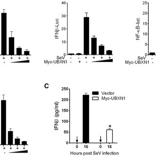 SV Infection Induces Endogenous UBXN1 and MAVS Interaction