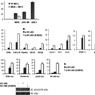 Endogenous MAVS is ubiquitinated following viral infection