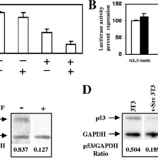 (PDF) Role of STAT3 in regulating p53 expression and function