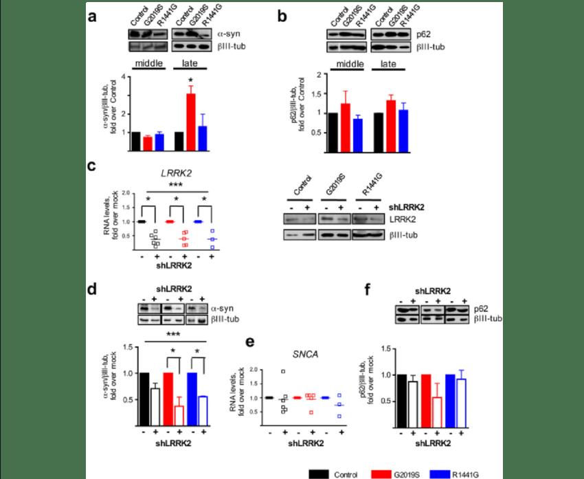 LRRK2 regulation on α-synuclein levels. a Western blot