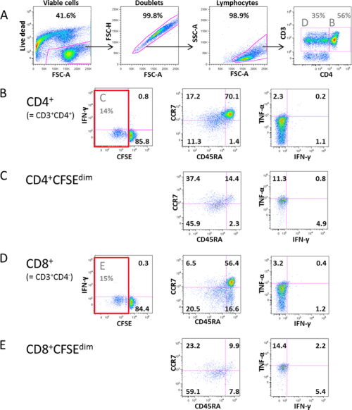 small resolution of example of the 8 color facs analysis of t cells stimulated with pertussis antigen