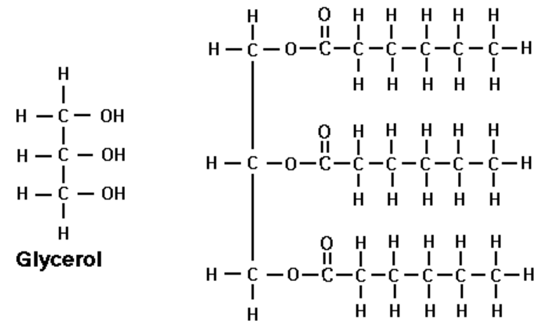 1 Chemical structure of glycerol (left) and a saturated