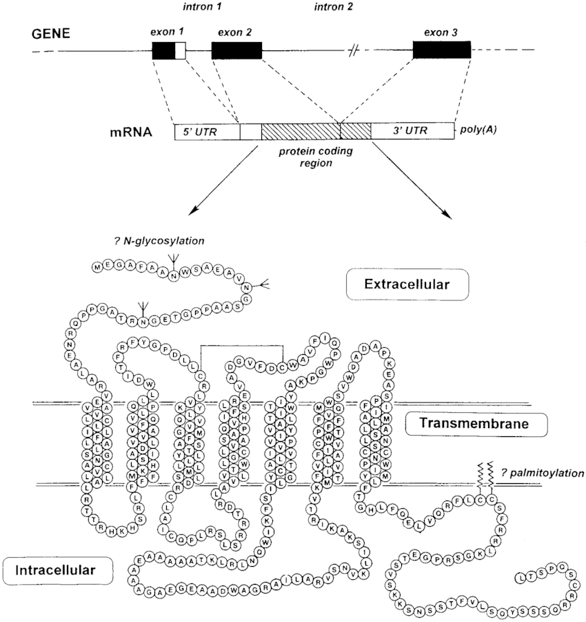 Schematic diagram to illustrate the biosynthesis of the