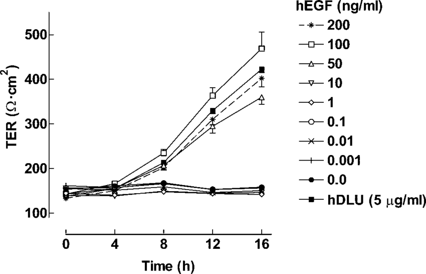 hEGF enhances the TER in a concentration-and time