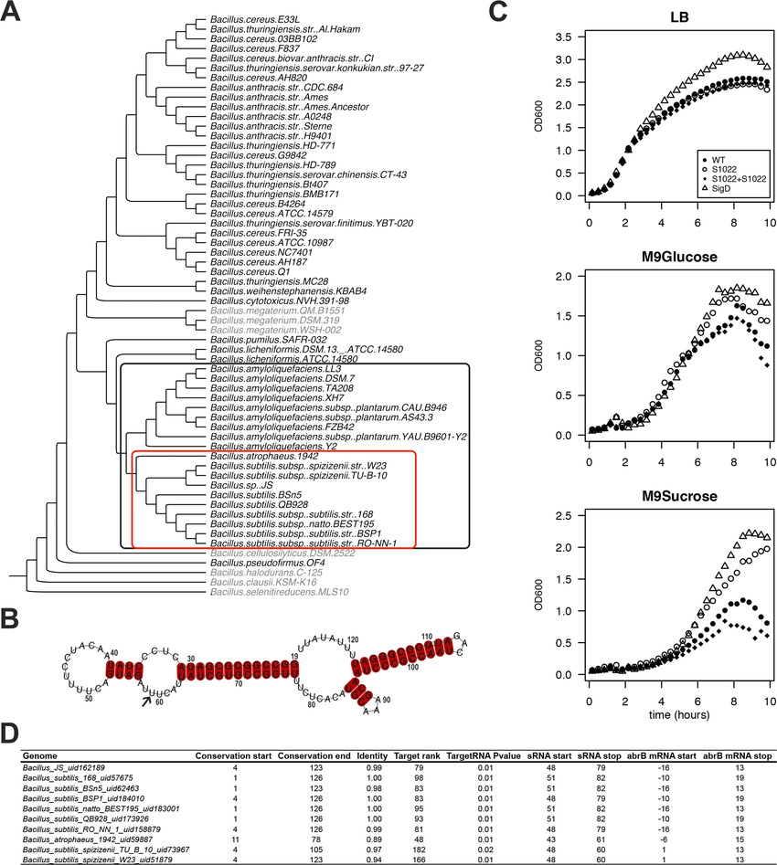 The RnaC/S1022 growth phenotype is linked to the