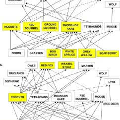 Diagram Of A Tropical Forest Buick Wiring Diagrams Free Boreal All Data The Food Web In Kluane Region Soil