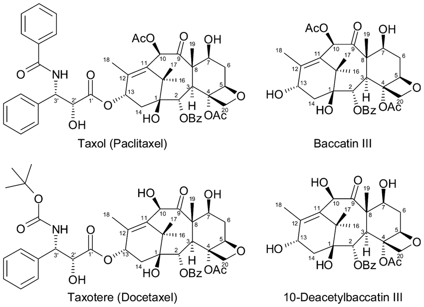 Structures of Taxol, the related semi-synthetic drug