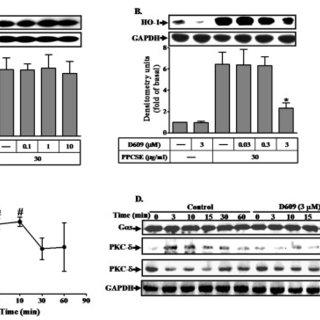 PPCSE induces HO-1 expression through PDGFR/PI3K/Akt