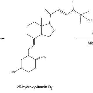 Vitamin D 3 conversion to 25-hydroxyvitamin D in the liver