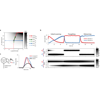 (PDF) Functional consequences of pre- and postsynaptic