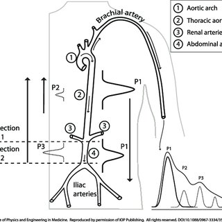 (PDF) Assessment of cardiovascular function from multi
