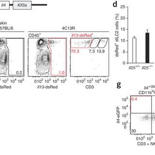 (PDF) Cutaneous immunosurveillance and regulation of
