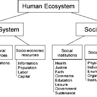 A general diagram of the major components of the human