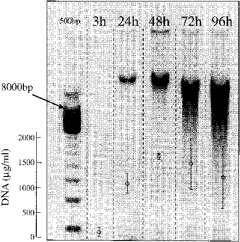 Results of time series tests of extraction yield for