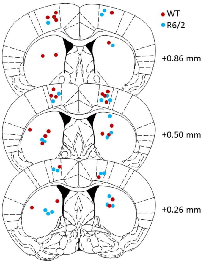 Dysfunctional Behavioral Modulation of Corticostriatal