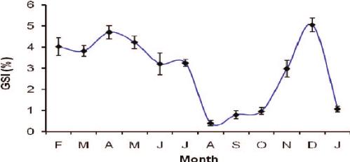 Monthly variation of gonadosomatic index (GSI) of female A