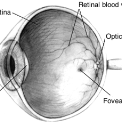Human Eye Diagram Simple How To Design A Network 1 General View Of The Pointing Optics Cornea Iris Aperture Lens And Retinal Structures Macula Surrounding Fovea