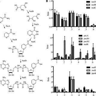 Virulence of NAD biosynthetic mutants in mice as