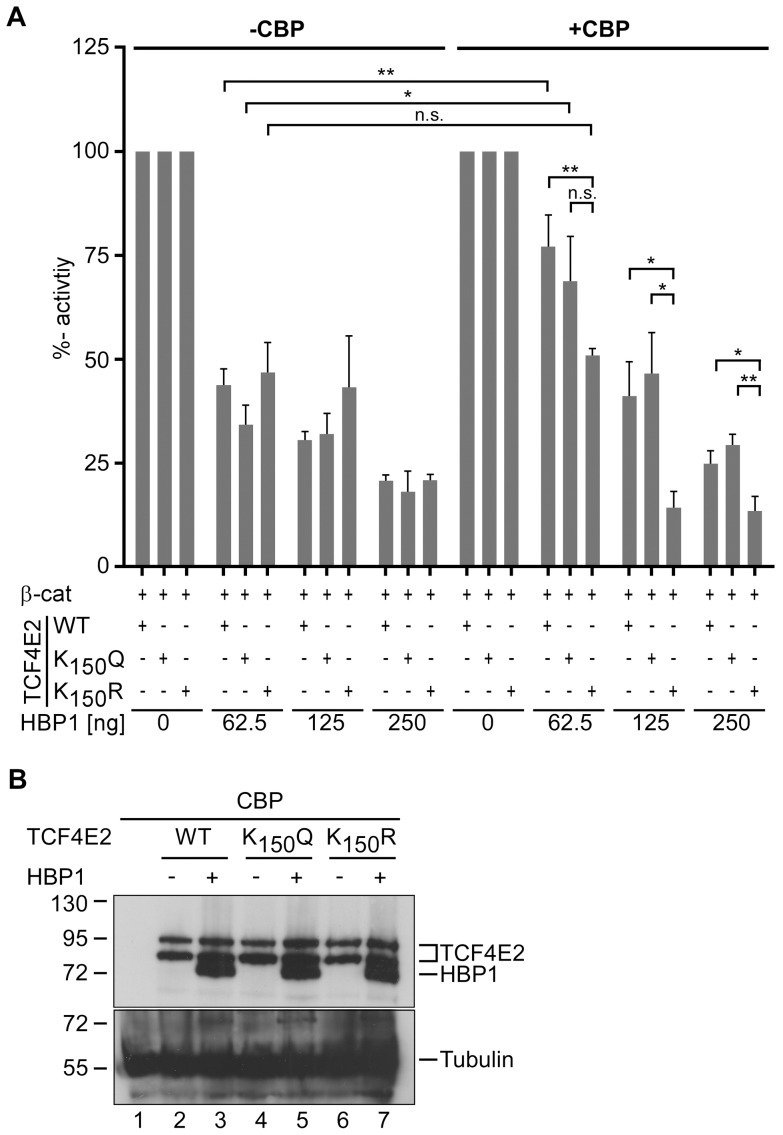 medium resolution of  a hek293 cells were cotransfected with combinations of firefly and download scientific diagram