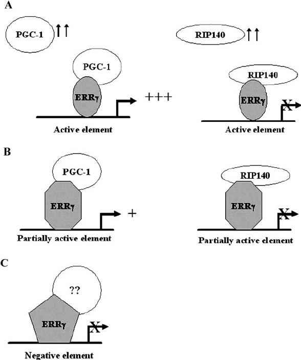 Deoxyribonucleic acid response element-dependent