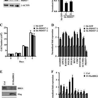 (PDF) Protein Arginine Methyltransferase 7 Regulates