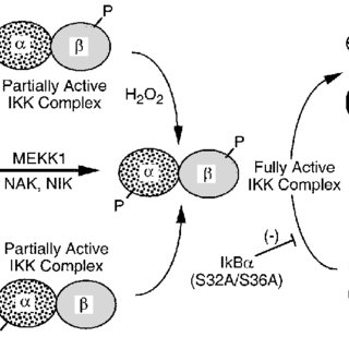 Schematic summary of GPx-1 regulation of the IKK complex
