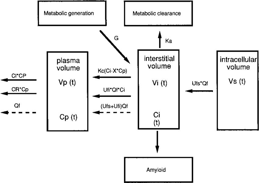 b 2-Microglobulin concentration during a dialysis cycle