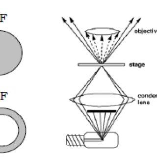 (PDF) Introduction to Microscopy