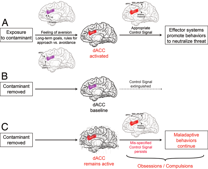 Proposed control signal theory of dACC dysfunction in OCD