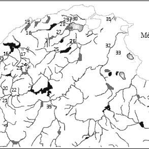 Dorsal habitus of genera of Elmidae. (35) Stenelmis, (36