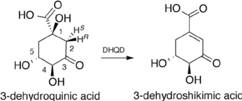 Catalyzed substrate