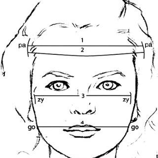 Transverse and perimeter measurements: 1, head width (Pa