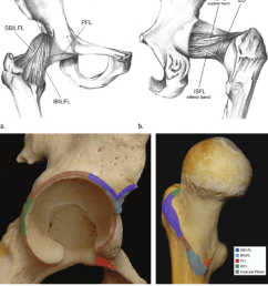 drawings show a anterior and b posterior views of the articular capsule [ 850 x 952 Pixel ]