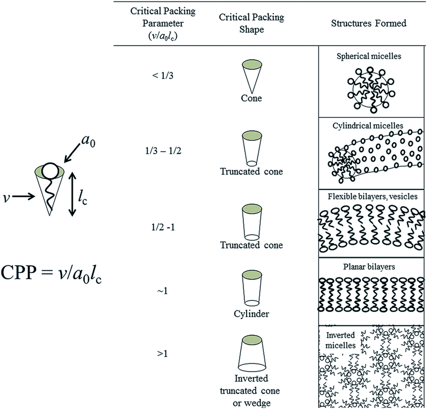 Molecular shapes and critical packing parameter (CPP) of