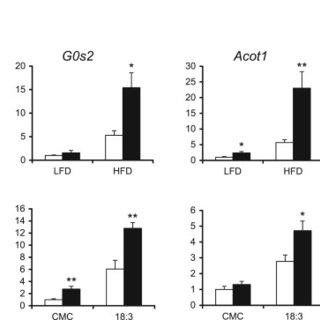 Angptl4 inhibits pancreatic lipase. (A) Luminal lipase