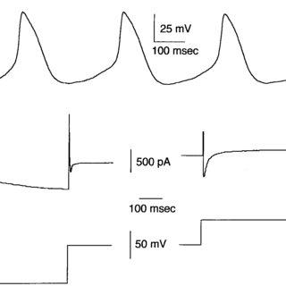 (PDF) Am J Physiol Heart Circ Physiol 2001 Verheule