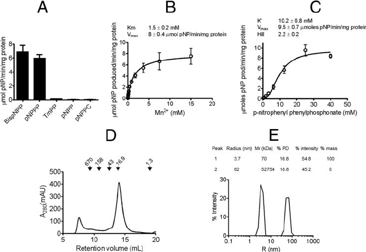 Biochemical characterization of rat 239FB. A . catalytic activity of... | Download Scientific Diagram