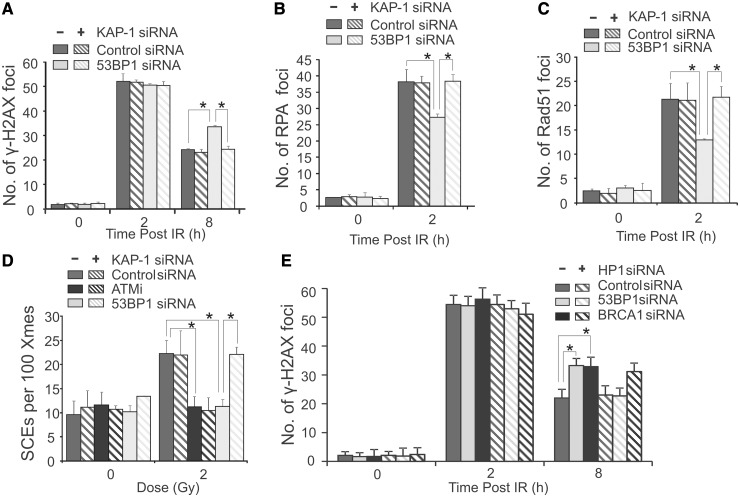 The defect in HR in 53BP1 siRNA cells can be relieved by