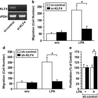 Role of KLF4 in growth of PC-3M-luc-C6 cells in a