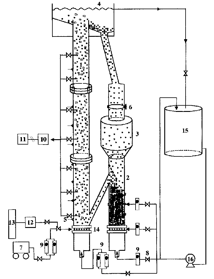 Schematic diagram of a three-phase circulating fluidized