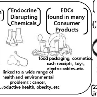 Quick overview of what endocrine disrupting chemicals and