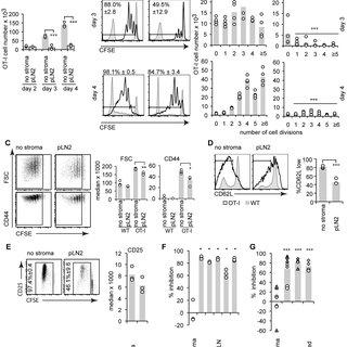 (PDF) Fibroblastic Reticular Cells From Lymph Nodes