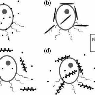 Aerosol particles size distribution schematic diagram for
