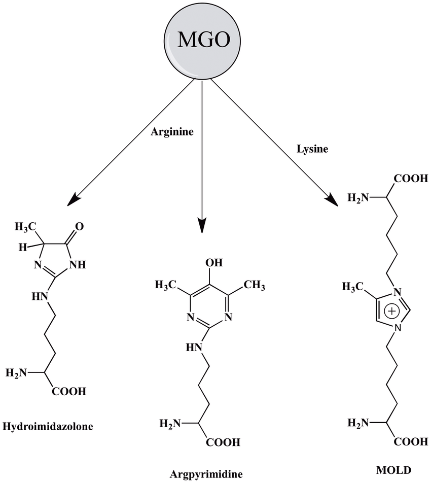MGO reacts with proteins to form AGEs, like