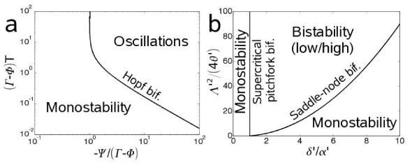 Stability analysis of the dynamic genetic circuit at the