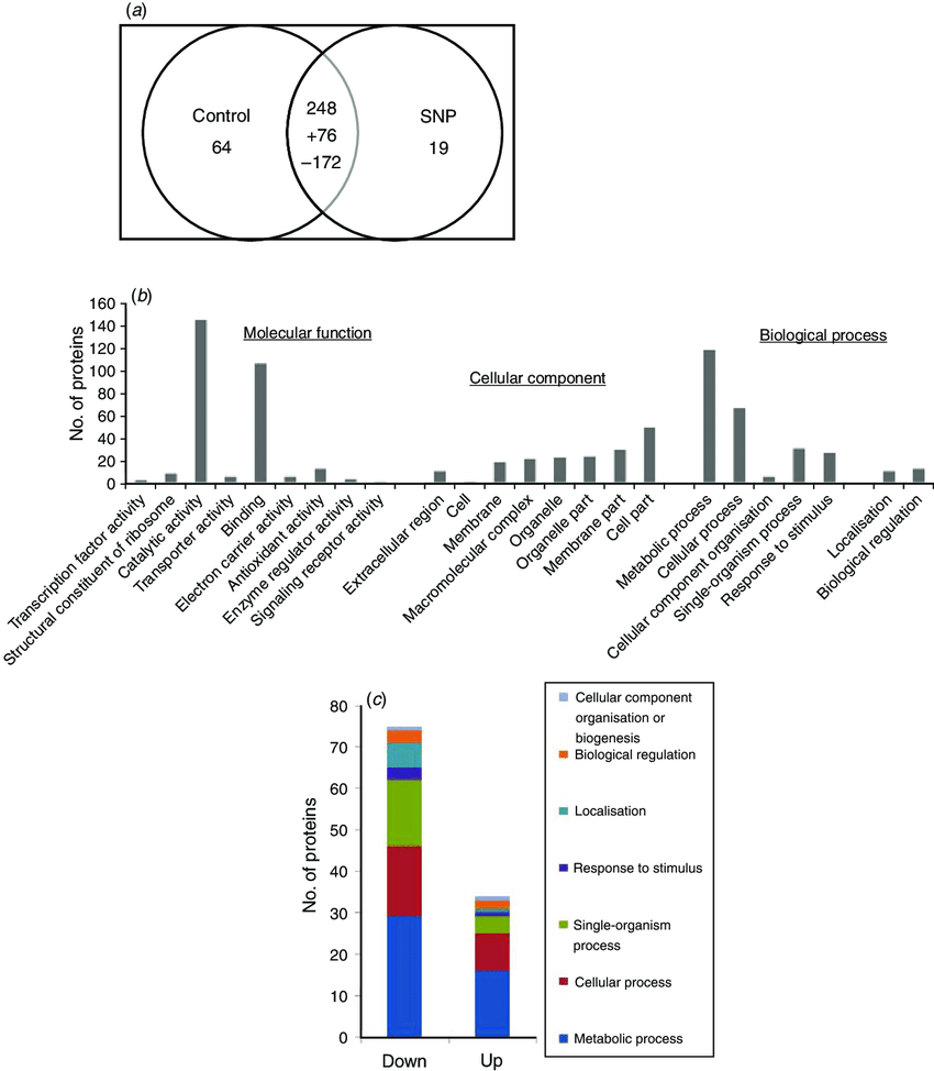medium resolution of summary of the snp responsive proteins identified in 60 days old download scientific diagram