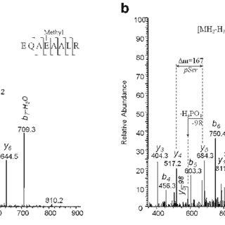 (PDF) Proteome Analysis of Adenovirus Using Mass Spectrometry